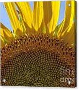 Sunflower Arch Acrylic Print