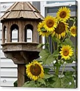 Sunflower Bird Feeder Acrylic Print