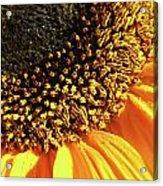 Sunflower Edge Acrylic Print