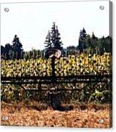 Sunflower Farm Scene Acrylic Print