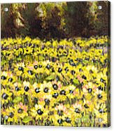 Sunflower Field Series W Silver Leaf By Vic Mastis Acrylic Print