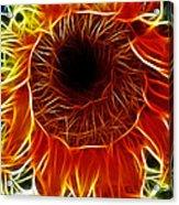 Sunflower Fractal Acrylic Print