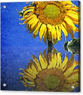 Sunflower Reflection Acrylic Print