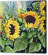 Sunflower Serenade Acrylic Print
