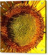 Sunflower Sunburst Acrylic Print
