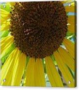 Sunflower-two Acrylic Print