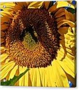 Sunflower Up Close Acrylic Print