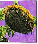 Sunflowers Birmingham Digital Acrylic Print