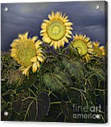 Sunflowers Digital Painting Acrylic Print