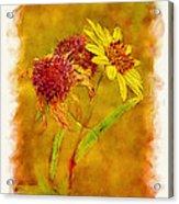 Sunflowers In Fall Acrylic Print