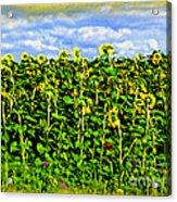 Sunflowers In France Acrylic Print by Joan  Minchak