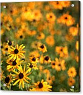 Sunflowers Acrylic Print by Michelle Peric