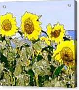 Sunflowers Sunbathing Acrylic Print by Artist and Photographer Laura Wrede