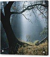 Sunlight Beams Through The Treetops Acrylic Print