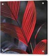 Sunlight Illuminates The Red Leaves Acrylic Print