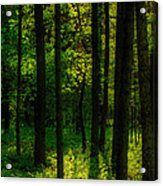 Sunlight In Forest Acrylic Print