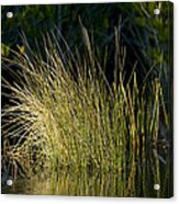 Sunlight On Grass Original Acrylic Print