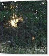 Sunlight Orbs 3 Acrylic Print