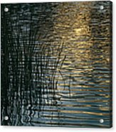 Sunlight Reflects On Rippled Water Acrylic Print