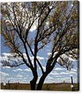 Sunlight Through The Tree Acrylic Print
