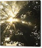 Sunlight Through Tree Cahir, County Acrylic Print