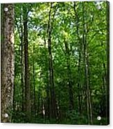 Sunlit Forest Acrylic Print