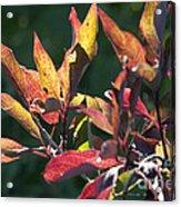 Sunlit Leaves Acrylic Print