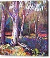 Sunlit Acrylic Print
