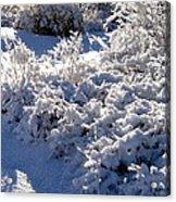 Sunlit Snowy Sanctuary Acrylic Print