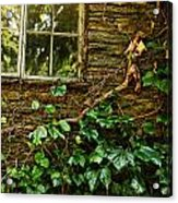 Sunlit Window And Grapevines Acrylic Print by HD Connelly