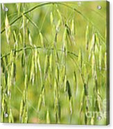 Sunny Day At The Oat Field Acrylic Print