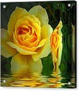 Sunny Delight And Vase 2 Acrylic Print