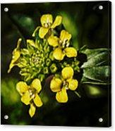 Sunny Floret Acrylic Print
