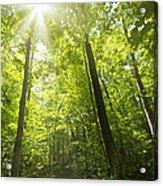 Sunny Forest Path Acrylic Print