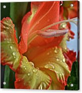 Sunny Glads Acrylic Print by Susan Herber