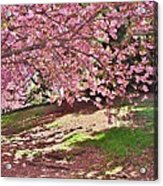 Sunny Patch Under The Cherry Trees Acrylic Print