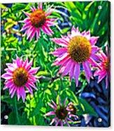 Sunny Pink Acrylic Print