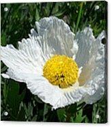 Sunny Side Flower Acrylic Print