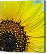 Sunny Summer Sunflower Acrylic Print