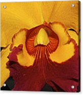 Sunny Yellow Orchid Acrylic Print