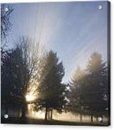 Sunray Through Trees And Fog Acrylic Print