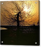 Sunrise And Tree Acrylic Print