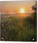 Sunrise On A Dew-covered Cattle Pasture Acrylic Print