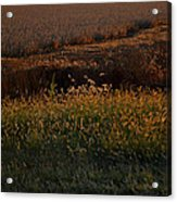 Sunrise On Wild Grasses II Acrylic Print