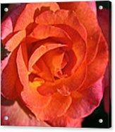 Sunrise Rose Acrylic Print