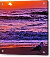 Sunrise Sea And Seagull Acrylic Print
