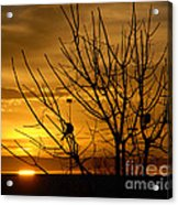 Sunrise Song Acrylic Print