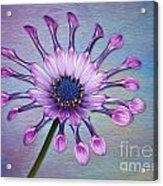 Sunscape Daisy Acrylic Print
