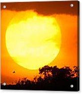 Sunset And Bird Acrylic Print