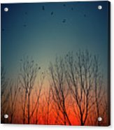 Sunset Behind Trees Acrylic Print by Luis Mariano González